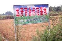图3 隆回县北山乡百合基地