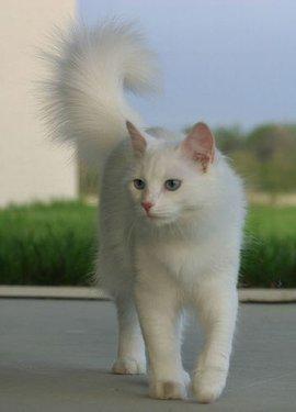 猫身体yabo亚博体育