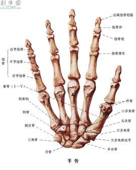 手各部位的名称图解
