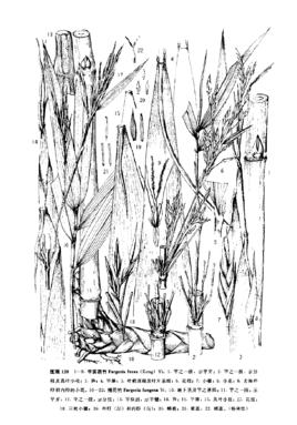 高清竹子黑白铅笔画