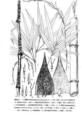 长竹子图片简笔画手绘