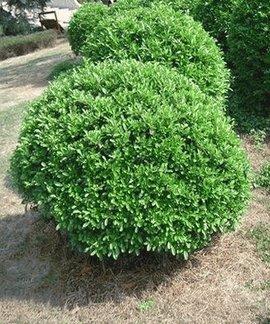 双子叶植物根初生结构简图