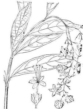 桔子树的画法简笔画