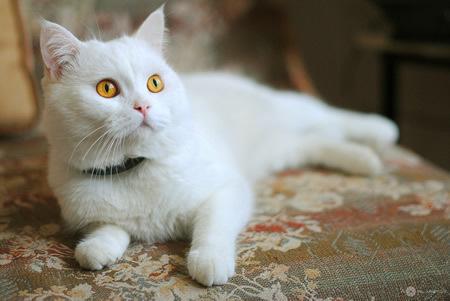 白猫风景图片 正方形