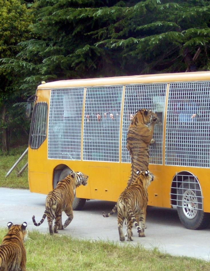 折叠 编辑本段 旅游景区 折叠 表演区 动物表演场