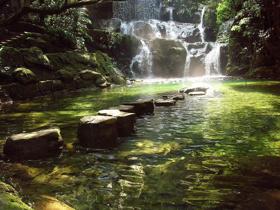 有粗壮挺拔的锥树,枸(jǔ)橼(yuán),榄树,榕树,有被称为活化石的孑(j
