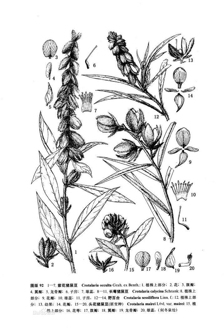 5种白细胞手绘图