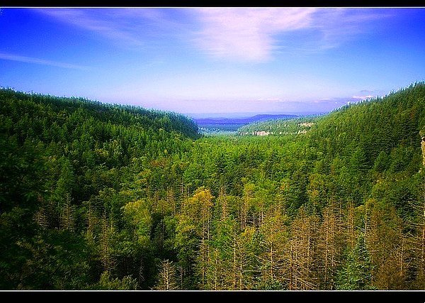 森林,谷底南北长约3公里,古松参天,巨石错落,是长白山海拔最低的风景图片
