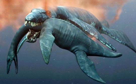 主要介绍生活在海洋中的鲸类和生活与海洋密切相关的鳍脚目动物和北极