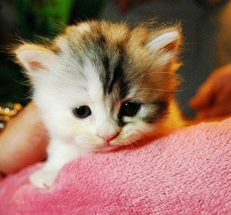 猫科动物养成其独特的饮食习惯有