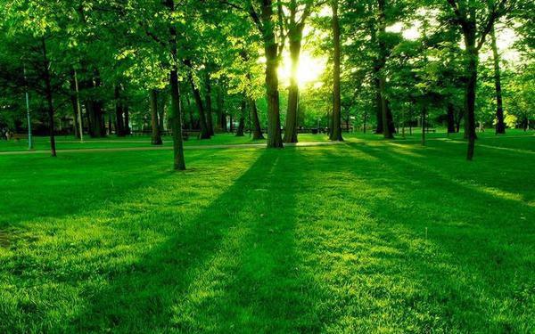 夏天的成语-形容春天的成语/形容夏天的词语/形